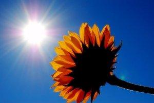 sunshine-and-flower